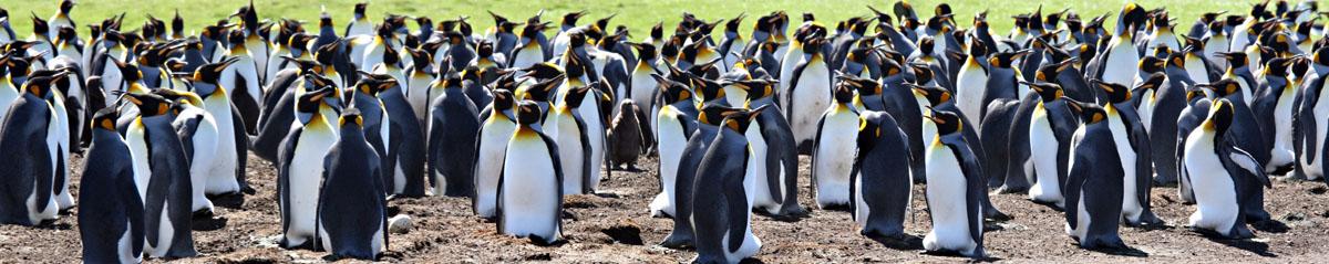 Пингвины, дизайн #08818