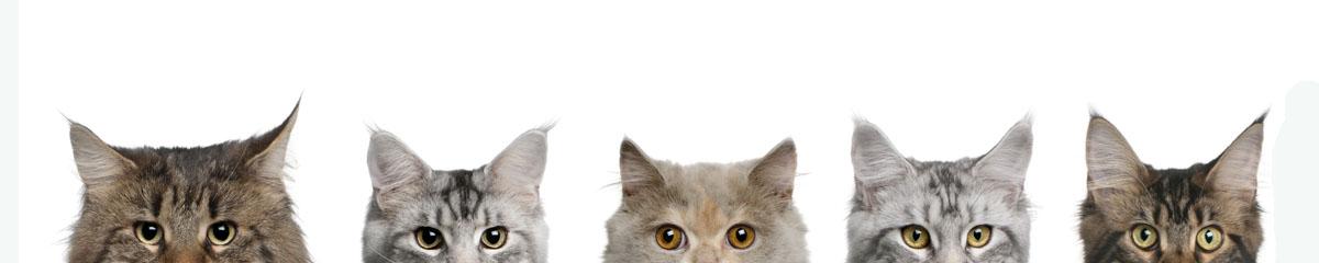 Коты, дизайн #08819