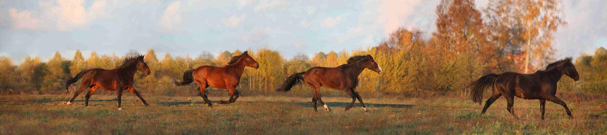 Лошади, дизайн #08821