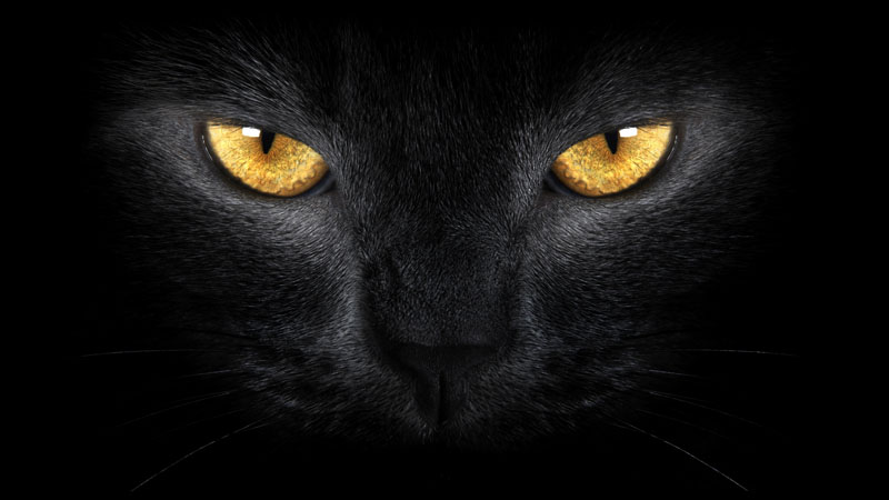 Постеры Кошка, дизайн #08846