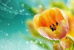 Тюльпан, дизайн #08853