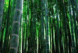 Бамбук, дизайн #08882