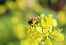 Пчела, дизайн #08886