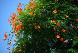 Цветущее дерево, дизайн #09204