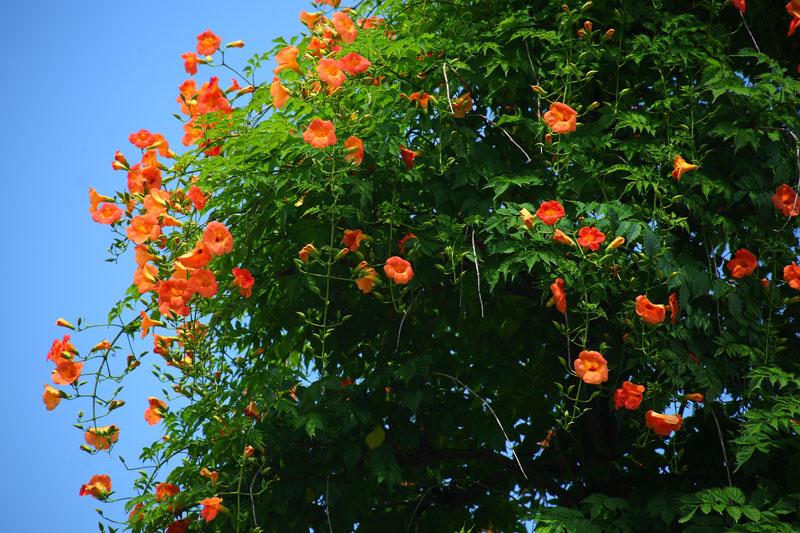 Фотообои под заказ Цветущее дерево, дизайн #09204