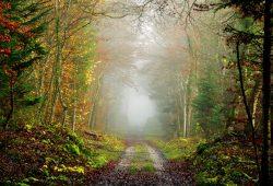 Тропа в лесу, дизайн #09206