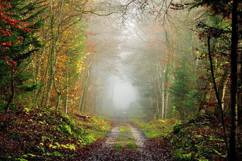 Фотообои под заказ Тропа в лесу, дизайн #09206