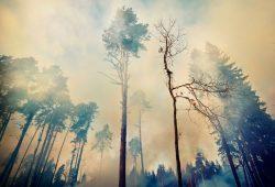 Дымный лес, дизайн #09214