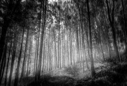 Лес, дизайн #09215