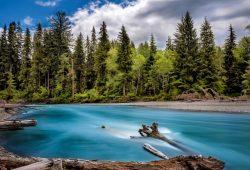 Река в лесу, дизайн #09217