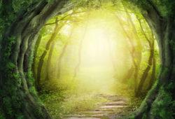 Дорожка в лесу, дизайн #09219