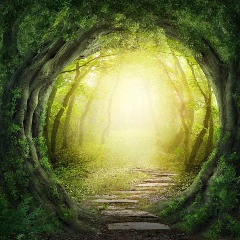 Фотообои под заказ Дорожка в лесу, дизайн #09219