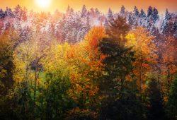 Осенний лес, дизайн #09223
