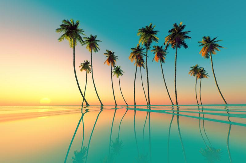 Фотообои под заказ Пальмы, дизайн #09230
