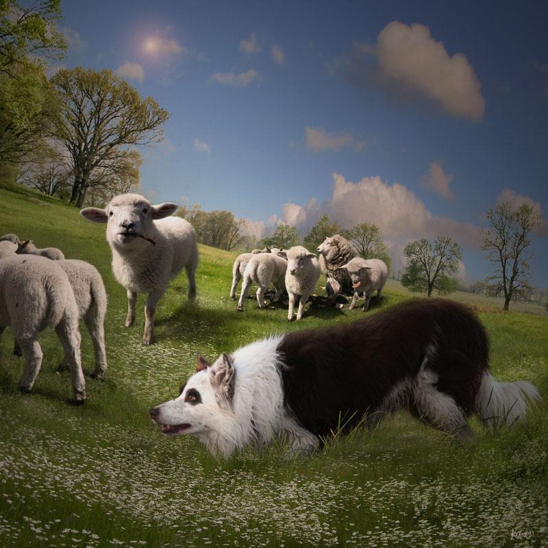 Фотообои под заказ Овцы и волки, дизайн #09237