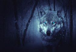 Волк, дизайн #09238