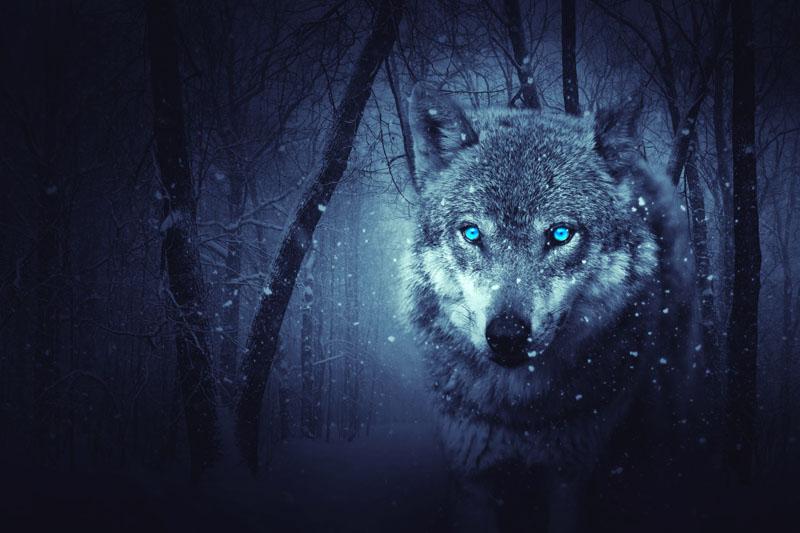 Фотообои под заказ Волк, дизайн #09238